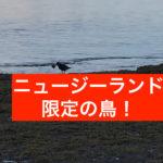 「あの誰ですか?」オークランド(ニュージーランド)海の不思議なトリ