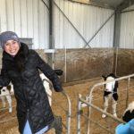 ニュージーランドでファーム体験!生まれたての赤ちゃんウシ♡乳搾り挑戦