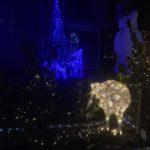オークランド(ニュージーランド)自宅「クリスマスイルミネーション」超本気